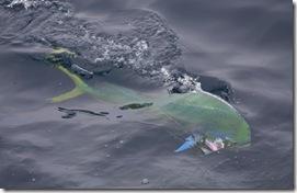 Pescas_Excu3