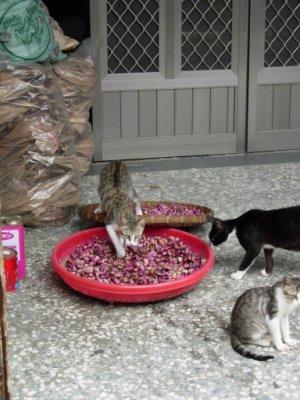 貓在玩蒜頭~